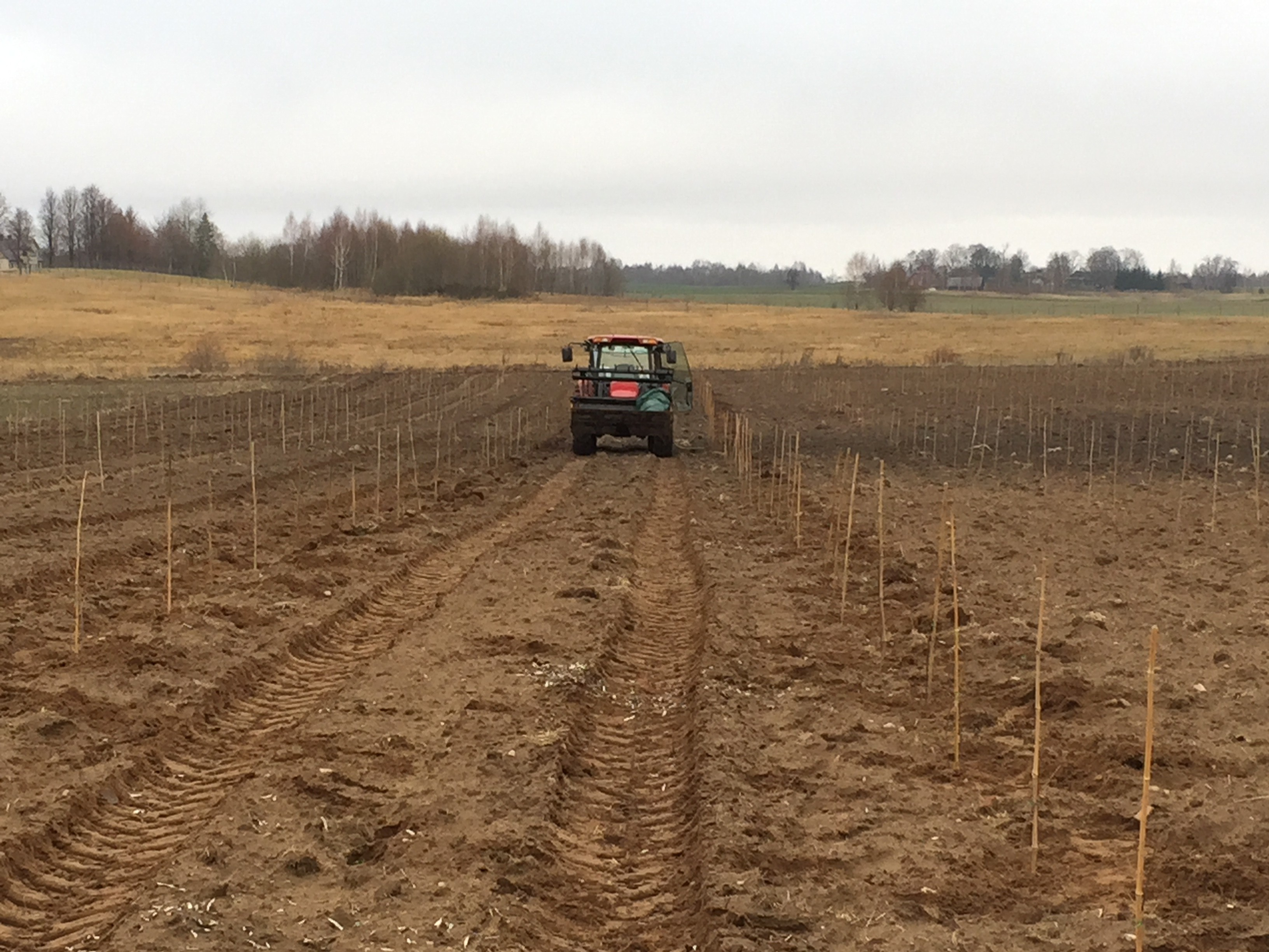 Preparing the fields for planting.