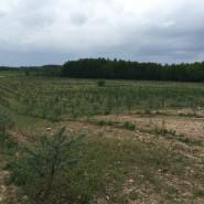 European union (EU). Ecological seabuckthorn plantation