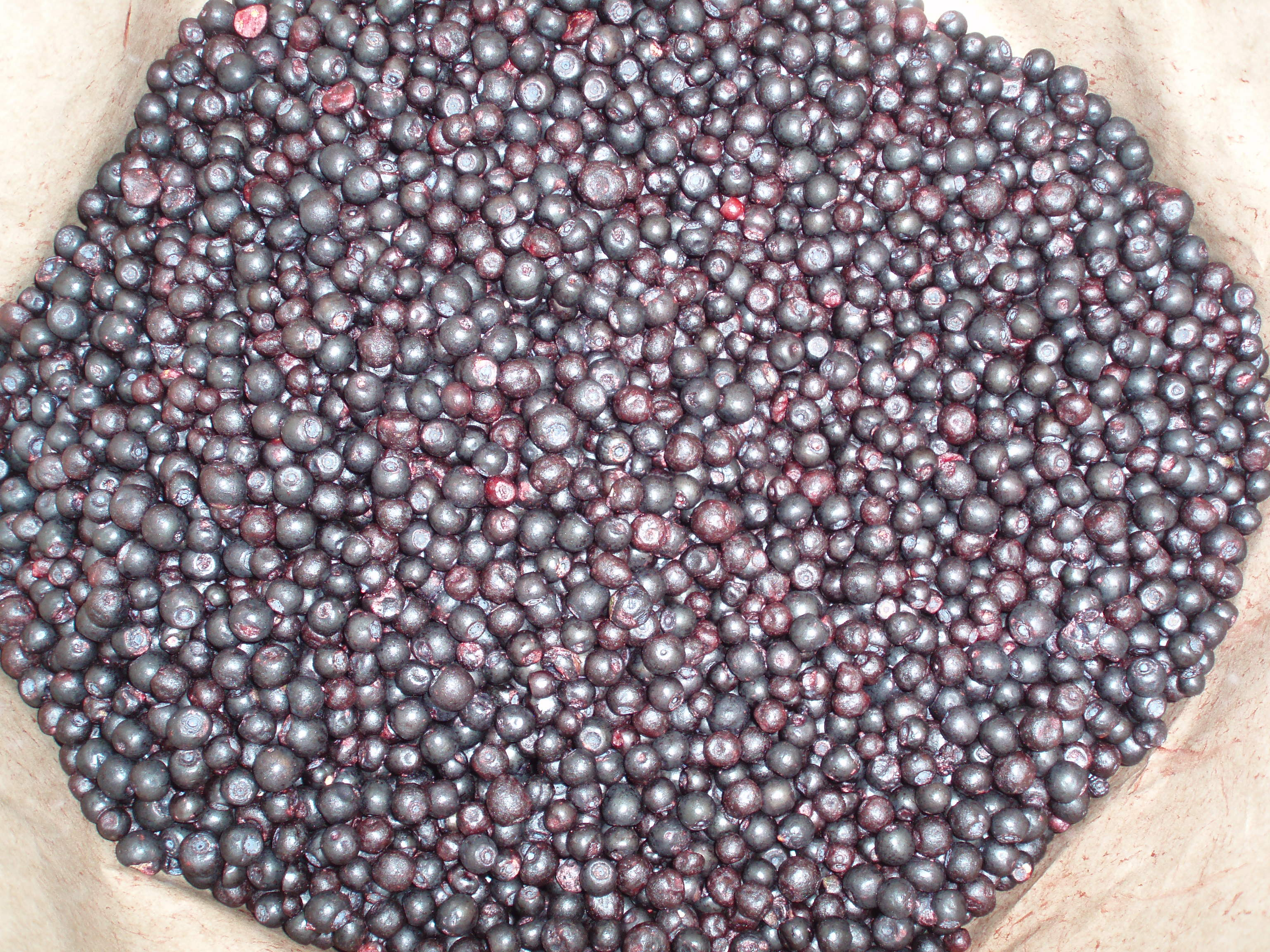 Cleaned vaccinium bilberry.