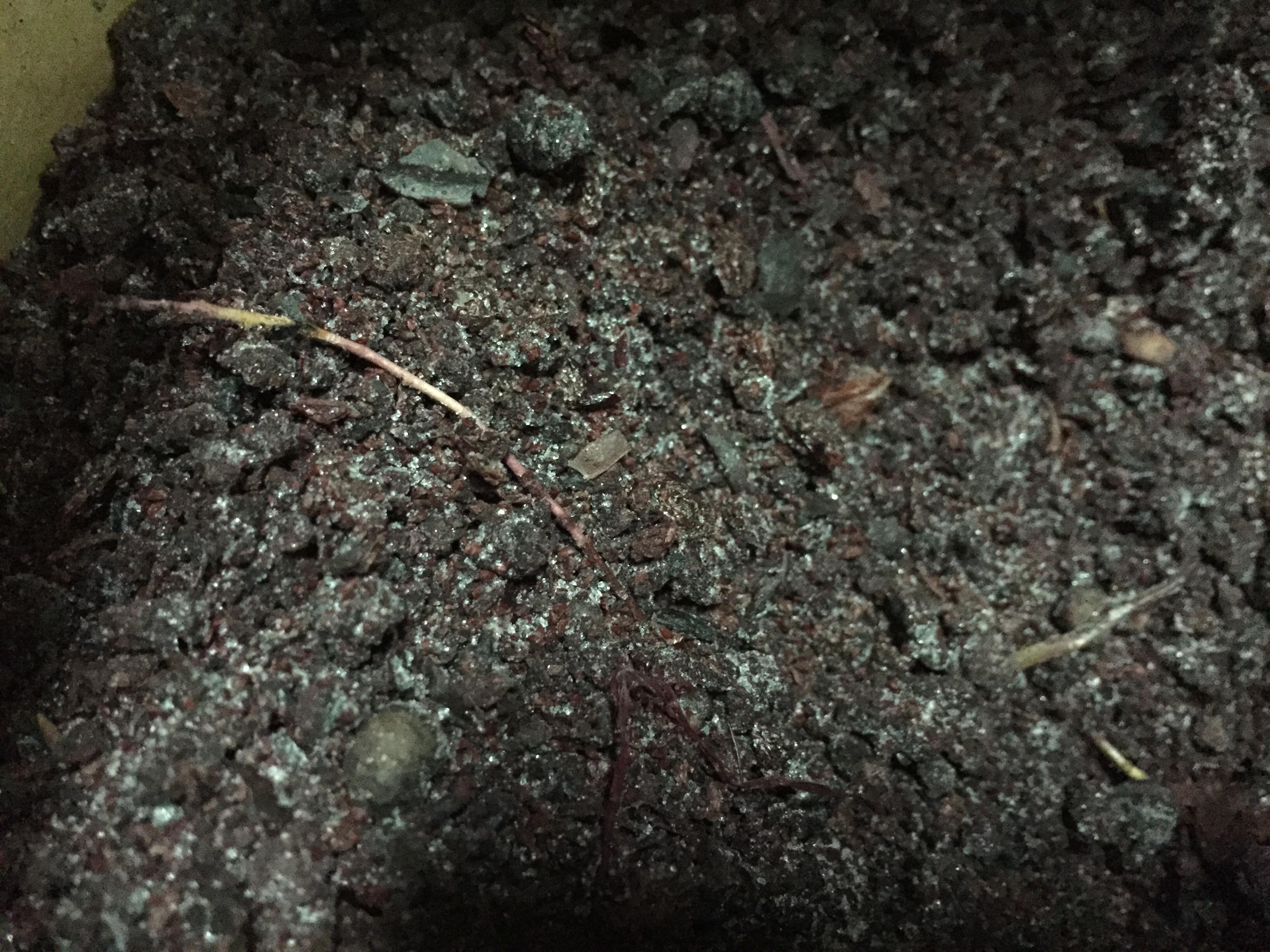 Frozen bilberry pomace/ presscake.